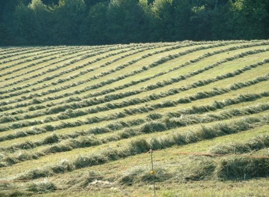 Terroir Hay